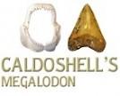 Caldoshell's Création - Bijoux et Sculpture corail noir - Dents de Mégalodon - Nouméa
