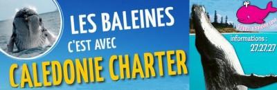 Affiliations - LHOOQ - Taxi boat, Visite au Phare Amédée - Nouméa - Nouvelle-Calédonie