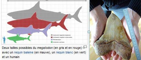 Offres spéciales - Caldoshell's Création - Bijoux et Sculpture corail noir - Dents de Mégalodon - Nouméa - Nouvelle-Calédonie