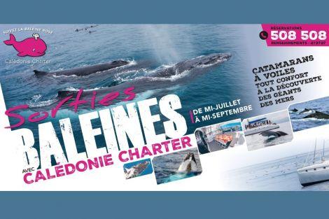 CALÉDONIE CHARTER - Nouvelle-Calédonie : observation des baleines à bosse de Juillet à Septembre