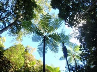 Parc provincial des Grandes Fougères - Photo 1 - Nouvelle-Calédonie