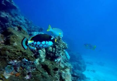 PLONGEE PASSION - Centre de plongée sous-marine - Nouméa - Photo 2 - Nouvelle-Calédonie
