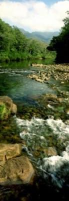 PARC DE LA RIVIERE BLEUE - Parc Provincial - Yaté - Photo 2 - Nouvelle-Calédonie