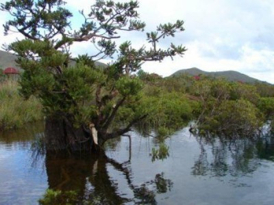 SITE DE NETCHA - Espace de loisirs Chutes de la Madeleine - Yaté - Photo 3 - Nouvelle-Calédonie
