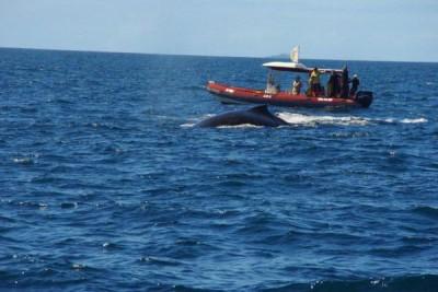 LHOOQ - Taxi boat, Visite au Phare Amédée - Nouméa - Photo 3 - Nouvelle-Calédonie
