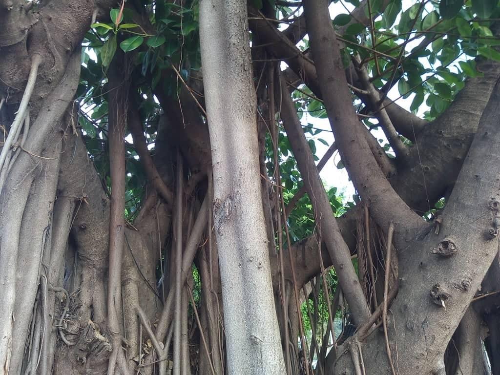 LE FRONTON ETCHEKHAN - Bar, Restaurant - Amicale basque - Nouméa - Photo 3 - Nouvelle-Calédonie