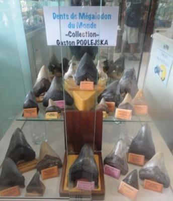 Caldoshell's Création - Bijoux et Sculpture corail noir - Dents de Mégalodon - Nouméa - Photo 1 - Nouvelle-Calédonie