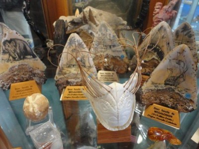 Caldoshell's Création - Bijoux et Sculpture corail noir - Dents de Mégalodon - Nouméa - Photo 3 - Nouvelle-Calédonie