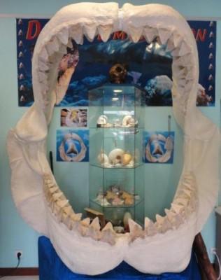 Caldoshell's Création - Bijoux et Sculpture corail noir - Dents de Mégalodon - Nouméa - Photo 5 - Nouvelle-Calédonie