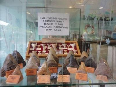 Caldoshell's Création - Bijoux et Sculpture corail noir - Dents de Mégalodon - Nouméa - Photo 6 - Nouvelle-Calédonie