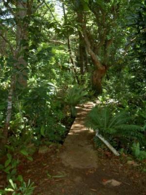 Grotte d'Oumagne dite Grotte de la Reine Hortense - Ile des Pins - Photo 2 - Nouvelle-Calédonie