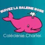 CALÉDONIE CHARTER - Nouvelle-Calédonie : observation des baleines à bosse de Juillet à Septembre - Nouvelle-Calédonie