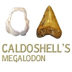 Caldoshell's Création - Bijoux et Sculpture corail noir - Dents de Mégalodon - Nouméa - Nouvelle-Calédonie